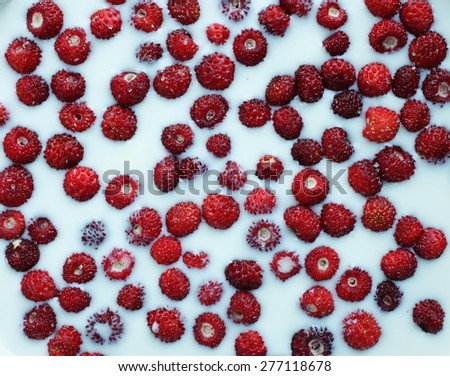 Closeup of ripe wild strawberries in milk, viewed from above. A few sugar crystals here and there.  - stock photo
