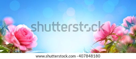 Closeup of rose,Copyspace for your text. - stock photo