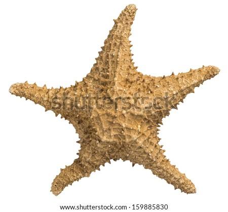 Closeup of Sea Star on White Background. Studio Shot - stock photo