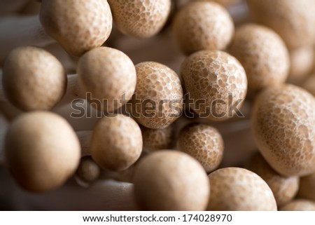 Closeup of Shimeji Mushrooms on Wooden Table