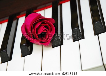 Closeup of shot of red rose on piano keyboard, signifying concepts such as love of music, creativity and love and romance.