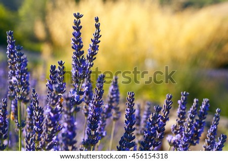Closeup of skinny plants, nice nature background, very shallow focus - stock photo