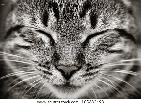 Closeup of sleeping cat face  (Black and white) - stock photo