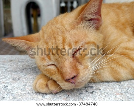 Closeup of sleeping cat lying on step in a temple in Bangkok Thailand. Image by Kevin Hellon