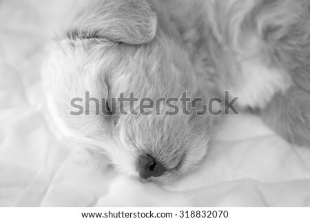 Closeup of sleeping my dog. Black and white - stock photo