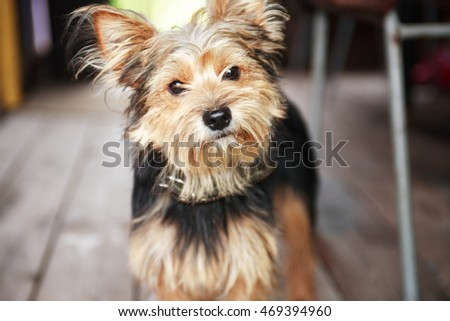 Closeup of small funny dog looking to camera