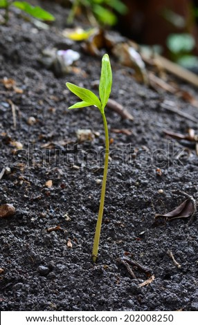 Closeup of small plant - stock photo