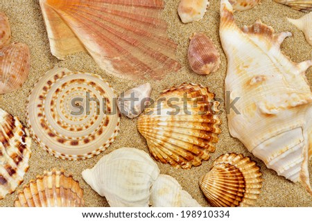 closeup of some seashells on the sand of a beach - stock photo
