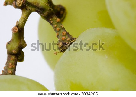 Closeup of some white grapes - stock photo