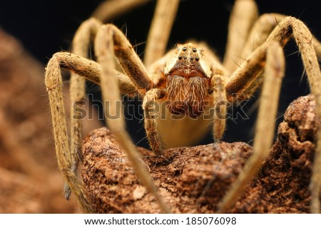 Closeup of spider in its natural environment  - stock photo