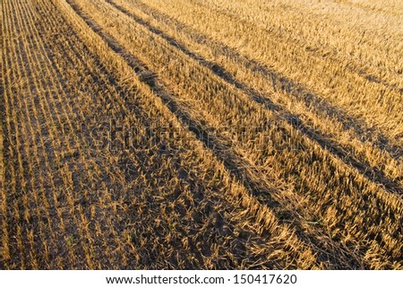 Closeup of straw texture on field - stock photo