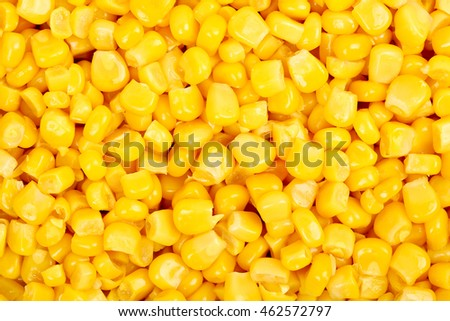 closeup of sweet corn for backgrounds
