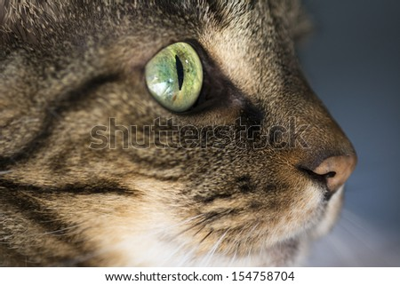 Closeup of tabby cat face in profile - stock photo