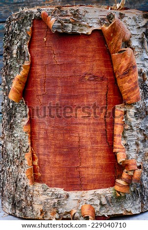 closeup of the bark a birch tree, vertical - stock photo