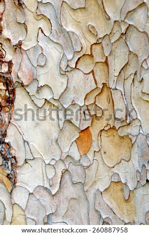 closeup of the bark of old tree trunk - stock photo
