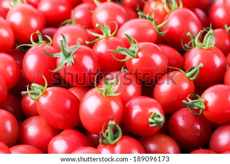closeup of the fresh cherry tomatoes ,delicious fruit