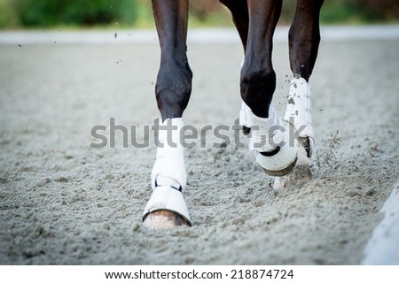 Closeup of the hooves from a horse while in trot on an outside track  - stock photo