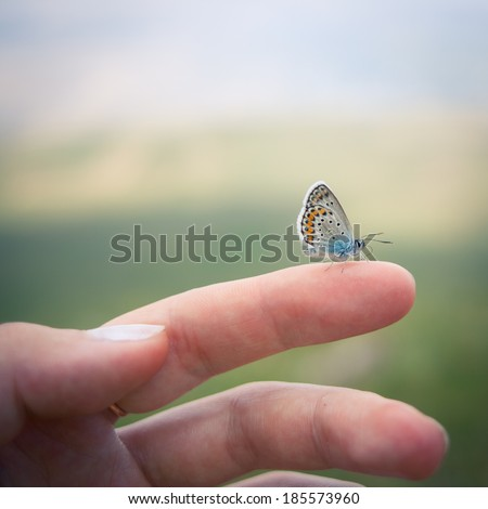 Closeup of the Idas Blue or the Northern Blue (Plebejus idas) butterfly sitting on a finger - stock photo