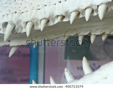closeup of the mouth and teeth of a crocodile - stock photo