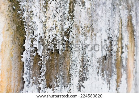 closeup of the old white walls and fungus with different shades - stock photo