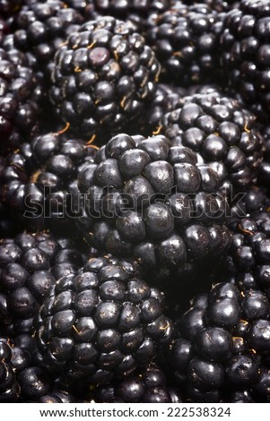 Closeup of three blackberries among many others.