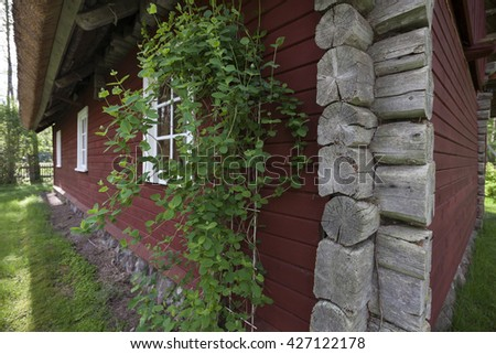 Closeup of traditional red wooden house with thatched roof in countryside Estonia. Focus at honeysuckle (lonicera).  - stock photo