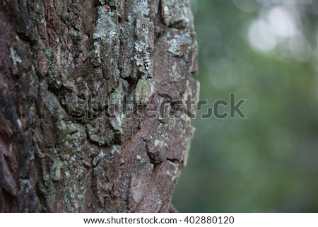 Closeup of tree trunk details with green background - stock photo