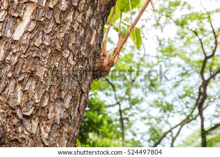 Closeup of tree trunk details with green bokeh