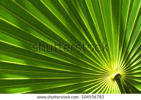closeup of tropical palm leaf with bright green leaves