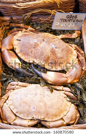 Closeup of two big crabs for sale at fish market in Paris - stock photo