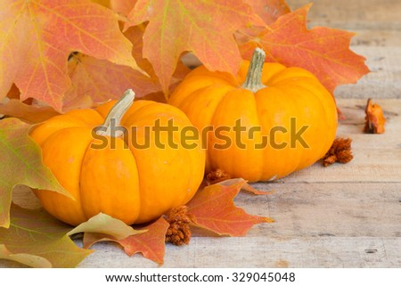 Closeup of two mini pumpkins with colorful fall leaves - stock photo