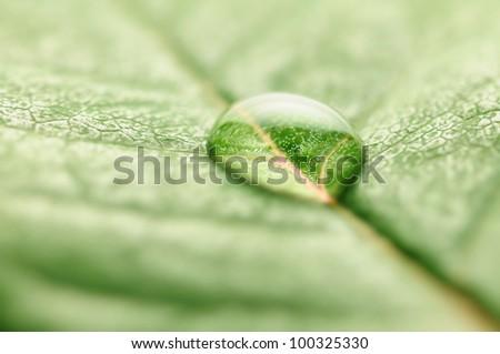 closeup of water drop on fresh leaf macro - stock photo