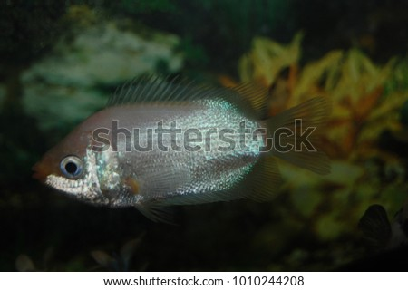 closeup of white fish in aquarium