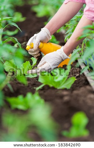 Closeup of woman hand with  gloves cultivating salad seedling in a greenhouse with a yellow spray bottle - stock photo