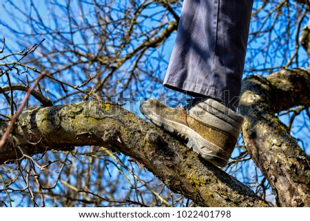 Closeup of worker boot on  a branch of a tree