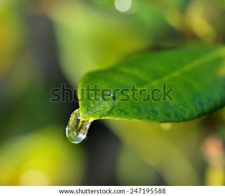 closeup on a drop of water froze on a green leaf - stock photo