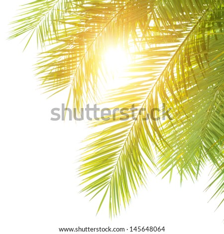 Closeup on green palm leaves border isolated on white shy background, fresh exotic tree foliage, paradise beach, summer vacation and holiday concept - stock photo