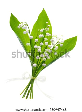 Closeup on lily of the valley, bunch of flowers on white background  - stock photo
