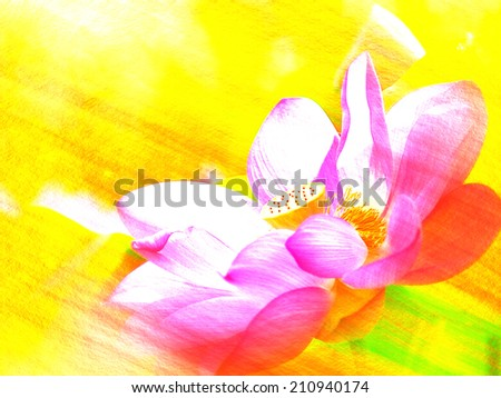 Closeup on lotus petal,Shallow Dof for adv or others purpose use - stock photo