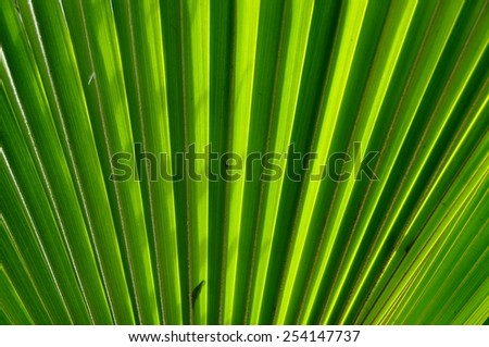 Closeup on palm leaf with sun shining through