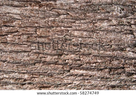 Closeup on the bark of a tree - stock photo
