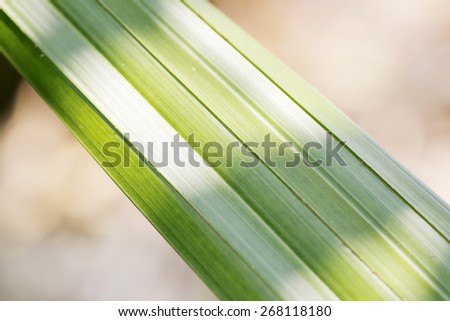 Closeup palm leave - stock photo