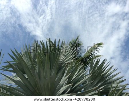 closeup palm leaves on rain clouds blue sky