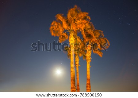 closeup palm tree on a night sky background