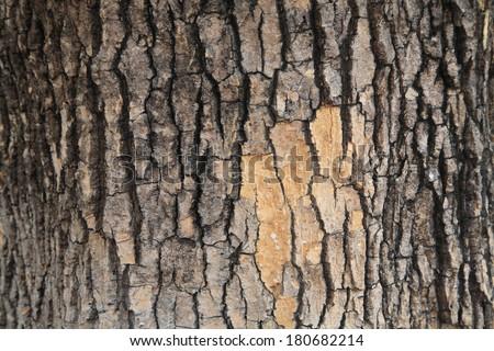 Closeup pattern of Tree bark texture - stock photo