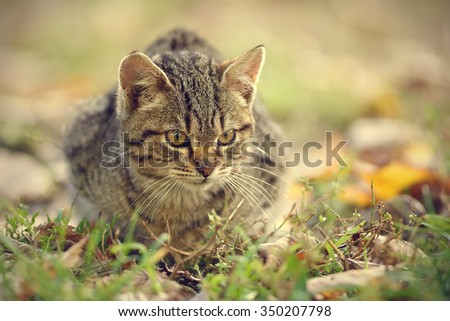 Closeup photo of a cat in the park