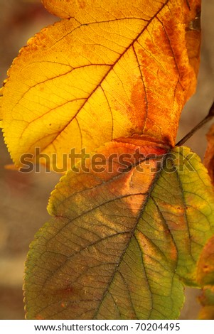 Closeup photo of bright orange and green autumn leaves