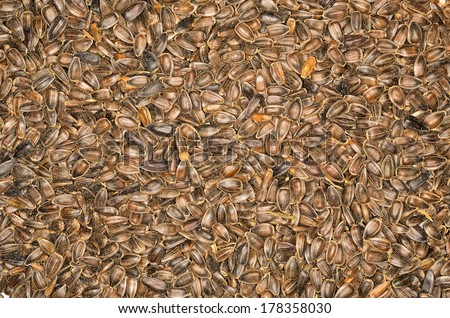 Closeup photo of dirty  sunflower seeds, background
