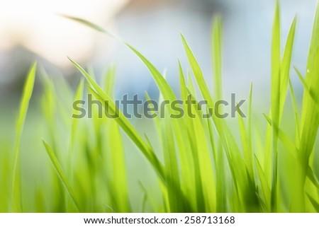 Closeup photo of fresh green grass at spring - stock photo