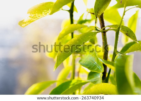 Closeup photo of fresh green leaves covered by dew - stock photo